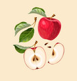 set of apple fruits and leaves vector image vector image