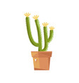 beautiful potted cactus isolated icon vector image vector image