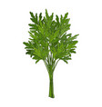 bunch of parsley hand drawn element objects for vector image vector image