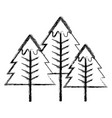 figure beauty natural pine tree design vector image vector image
