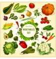Organic fresh vegetables and herbs poster vector image vector image