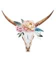 Bull skull watercolor vector image vector image