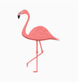 pink flamingo exotic tropical bird vector image