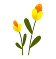 yellow tulips spring garden flowers isolated on vector image vector image