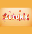 autumn background template with beautiful leaves vector image vector image