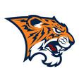 tiger head sport mascot vector image vector image