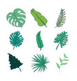 various type of tropical leaves hand drawn asset vector image vector image