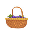 bunches grape in wicker basket winery vector image