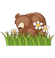 isolated picture grizzly bear in garden vector image vector image