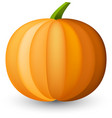 orange halloween pumpkin on white vector image