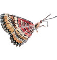 watercolor butterfly hand drawn vector image