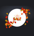 white blank with autumn maple leaves on vector image