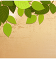 leaves background for you design vector image