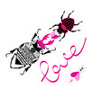 bright loving beetles on a white background vector image vector image