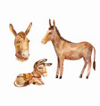 cute little donkey lying and standing portrait vector image vector image