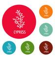 cypress leaf icons circle set vector image