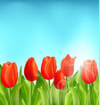 nature floral background with tulips flowers vector image vector image