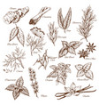 sketch icons of spices and herb seasonings vector image vector image