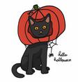 black cat wear pumpkin head halloween concept vector image vector image