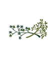 green twigs natural design element for wedding vector image vector image