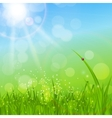 Summer Abstract Background with Grass