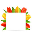 abstract clean card with bunch of spring tulips vector image