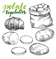 agriculture potatoes vegetable set hand drawn vector image vector image