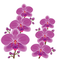 Exotic flower orchid over white vector