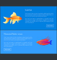 gold fish and flasher posters vector image vector image