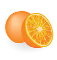 oranges isolated on a white background vector image vector image