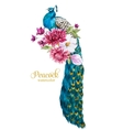 Watercolor peacock with flowers vector image vector image