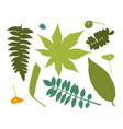 leaves collection for your design vector image