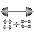 barbells and dumbbells vector image vector image
