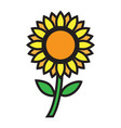 flat color sun flower icon vector image vector image