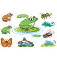 isolated set different insects vector image