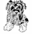 Sweet dog Miniature Schnauzer breed hand drawing vector image vector image