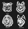 dog heads different breeds vector image vector image