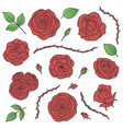 set red rose flowers with buds leaves vector image
