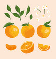 summer set with oranges and flowers isolated on vector image
