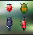 set of four colored beetles on green background vector image