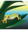 Frog sitting on a leaf in the swamp vector image vector image
