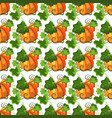 seamless pattern with pumpkin on the white vector image