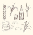 set sugar cane hand draw cane leaves background vector image vector image