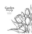 tulip flower and leaves drawing border vector image vector image