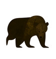 big brown bear isolated on white background vector image