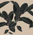 background with dark tropical ficus elastica vector image vector image