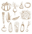 Farm vegetables sketches in vintage style vector image vector image