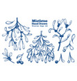 mistletoe hand drawn branches set retro style vector image vector image