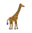 safari animals design vector image