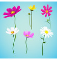 set of wild summer flowers vector image vector image